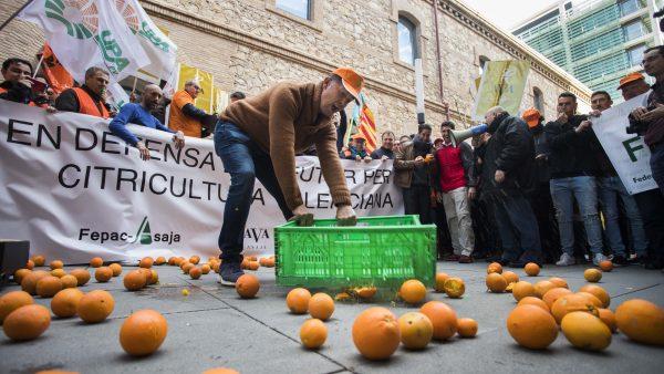 Mandarinas a 7,9 euros en mercados de Alemania que se pagan a 0,20 al agricultor valenciano